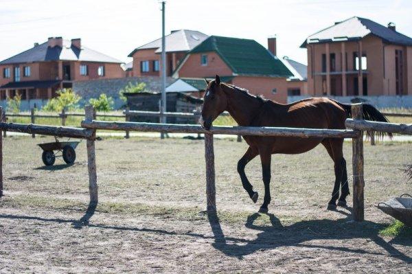 22d28cd-horses