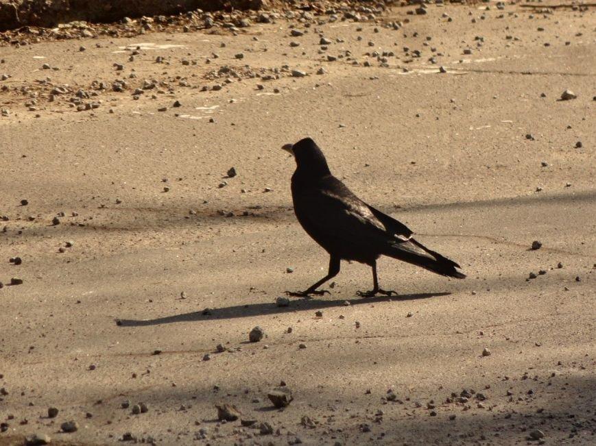 Фотопятница: «Крылатый Мариуполь», фото-8