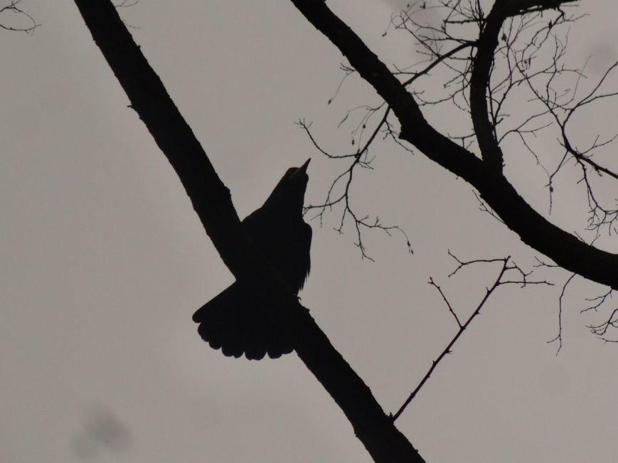 Фотопятница: «Крылатый Мариуполь», фото-7