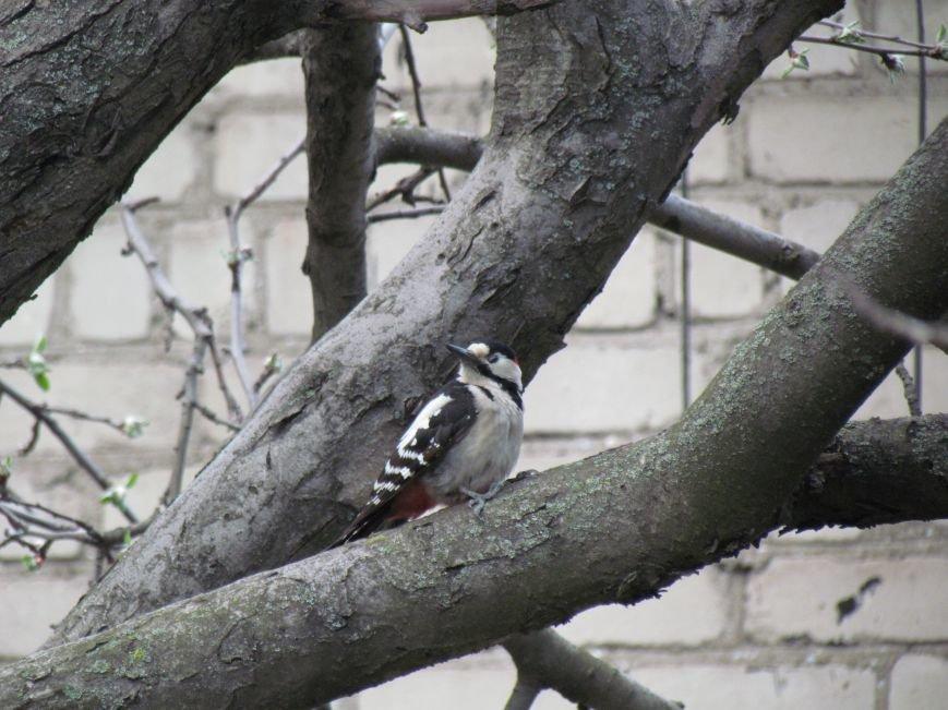 Фотопятница: «Крылатый Мариуполь», фото-9