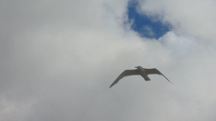 Фотопятница: «Крылатый Мариуполь» (фото) - фото 3