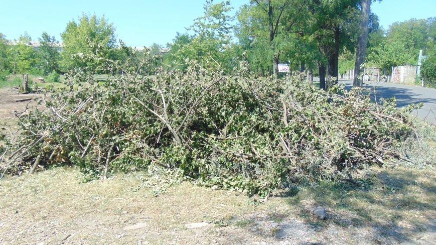 В Мариуполе продолжается тихая вырубка здоровых деревьев Приморского парка (ФОТОФАКТ) (фото) - фото 1