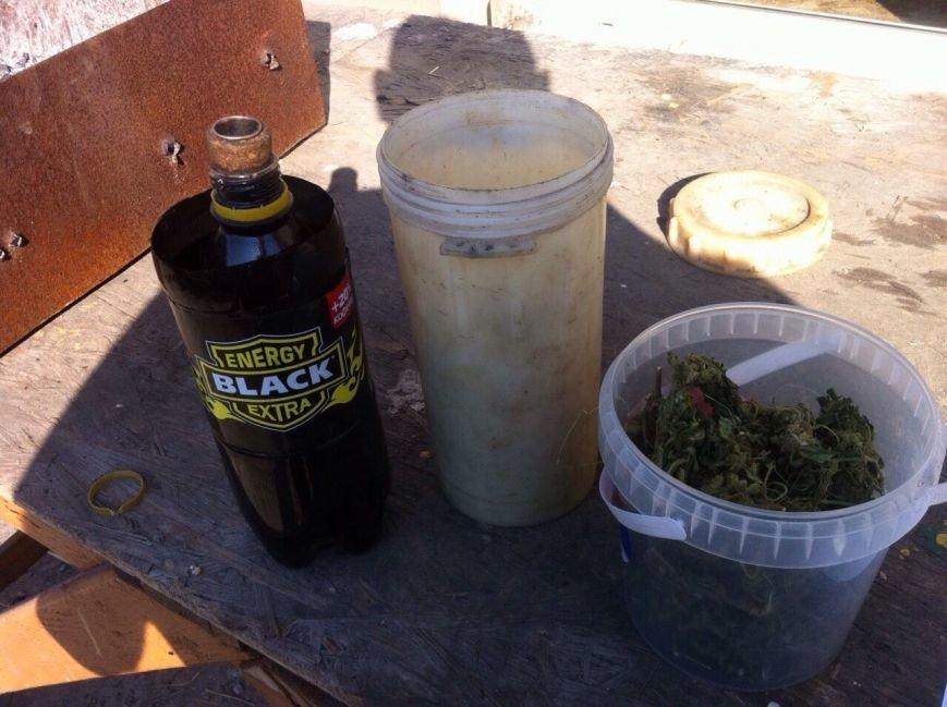 Днепродзержинец выращивал коноплю у себя в огороде (фото) - фото 2
