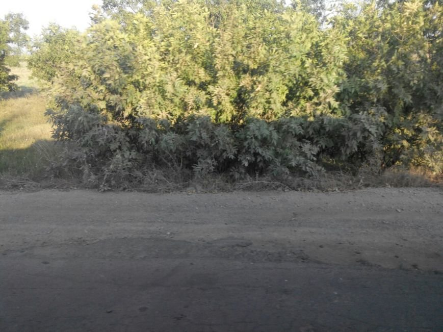 Николаевская «Ольвия»: дорога на «заповедные земли» превратилась в испытание (фото) - фото 2