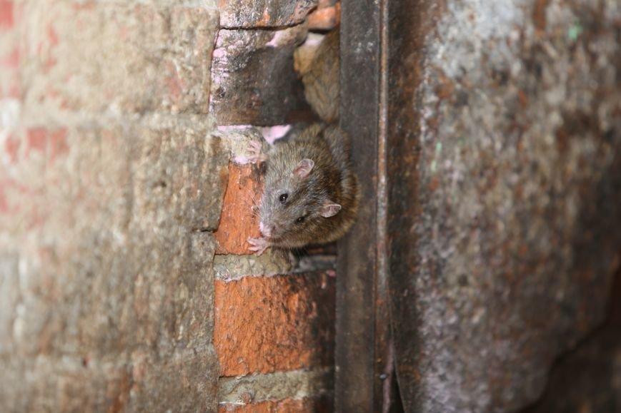 Нашествие крыс на Троицк (фото) - фото 1