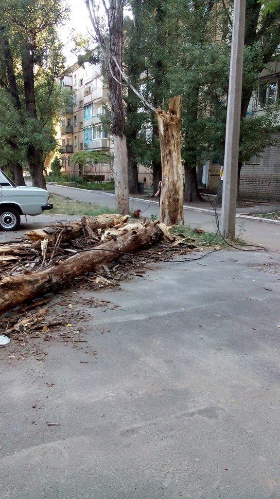 В  Кривом Роге сухое дерево оборвало электролинию и упало на детскую площадку (фото) - фото 1