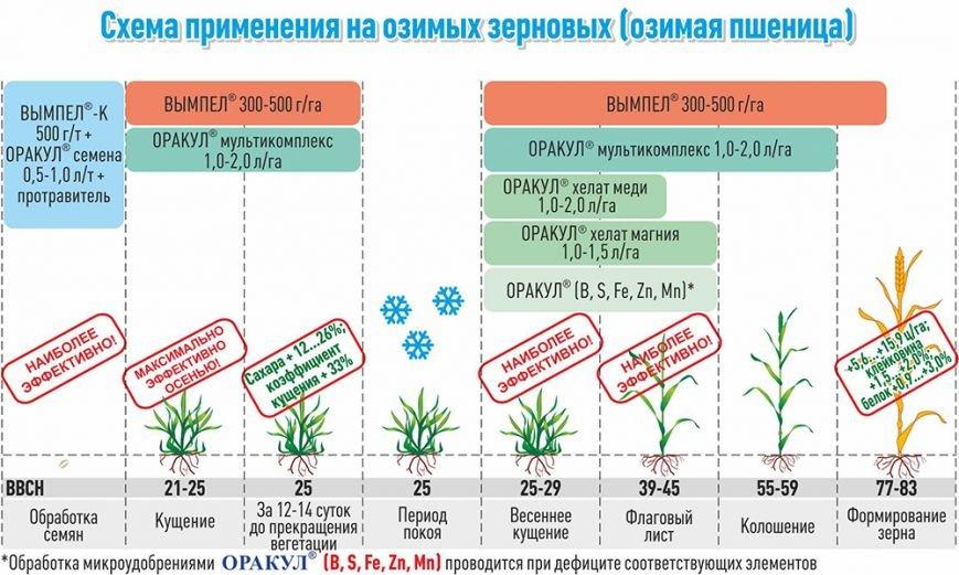 Сохранить посевы озимых и приумножить урожай (фото) - фото 3