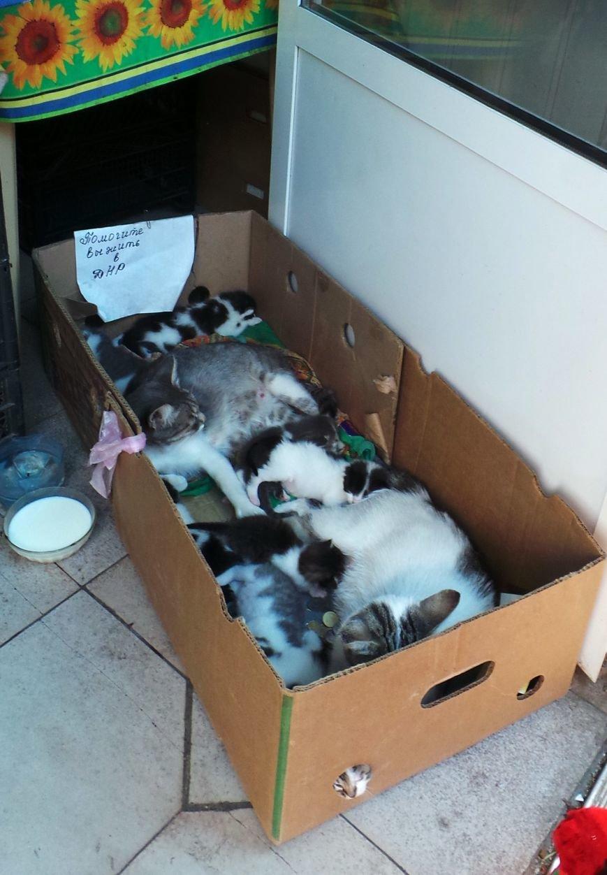 «Помогите выжить в ДНР» - гласила надпись на коробке, из которой раздавались котята (ФОТОФАКТ) (фото) - фото 1