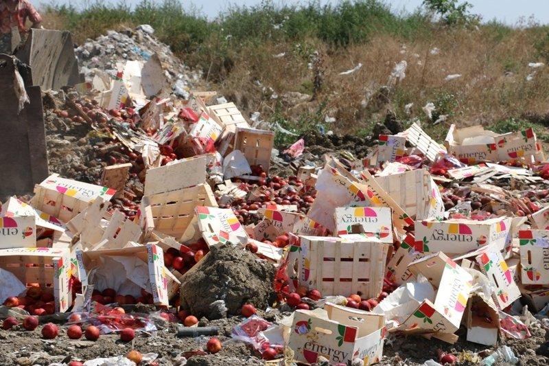 На городской свалке Керчи трактором раздавили более 4 тонн фруктов из Литвы (ФОТО) (фото) - фото 6