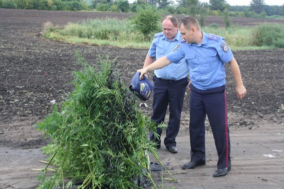Як міліціонери на Полтавщині насадження конопель спалювали. Фото (фото) - фото 1
