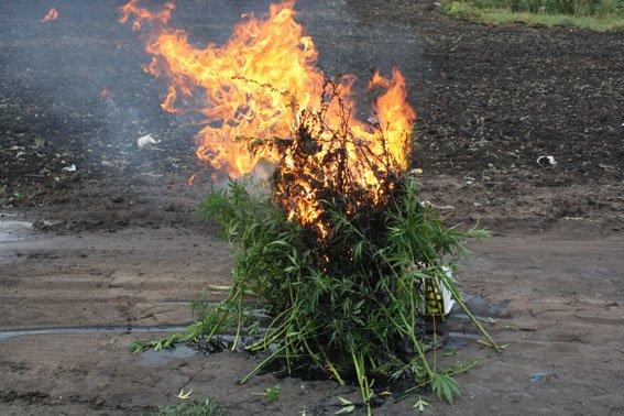 Як міліціонери на Полтавщині насадження конопель спалювали. Фото (фото) - фото 2