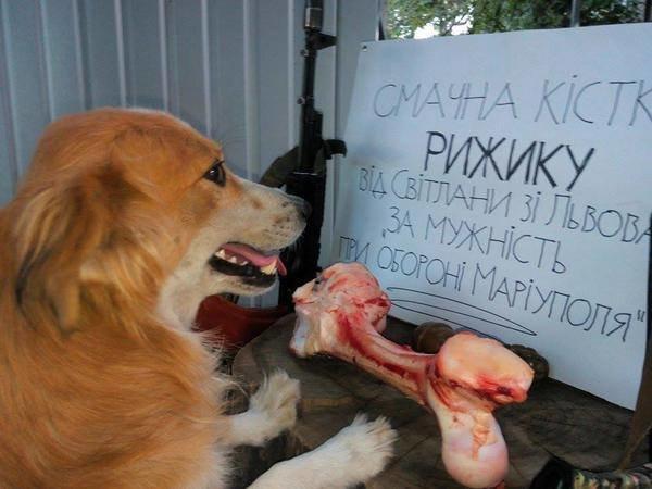 Мариуполь охраняет пожарный пес (ФОТО) (фото) - фото 1