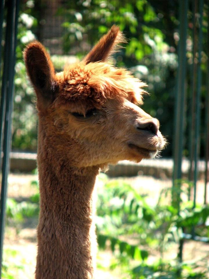 Обитатели николаевского зоопарка переняли «моду» на украшения и прически (ФОТО), фото-2