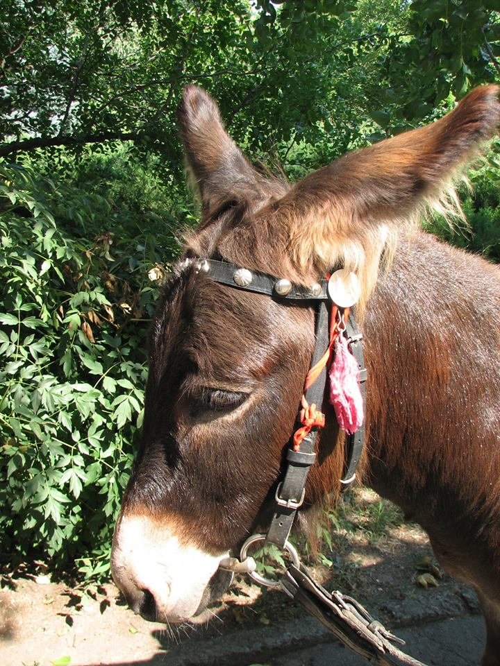 Обитатели николаевского зоопарка переняли «моду» на украшения и прически (ФОТО), фото-1
