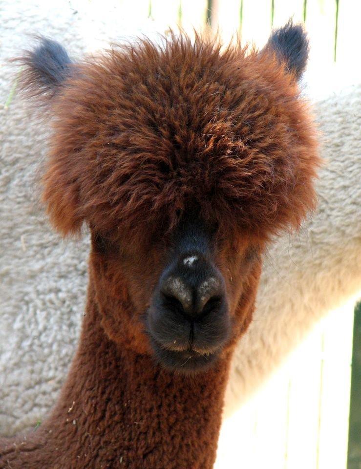 Обитатели николаевского зоопарка переняли «моду» на украшения и прически (ФОТО), фото-4