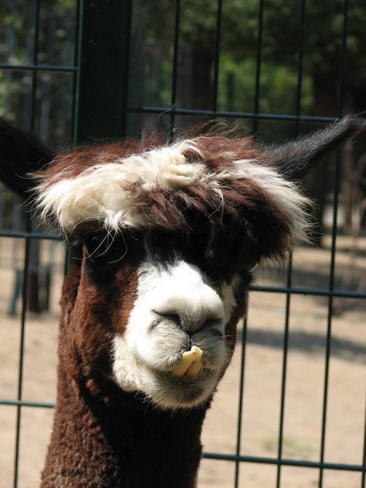 Обитатели николаевского зоопарка переняли «моду» на украшения и прически (ФОТО), фото-5
