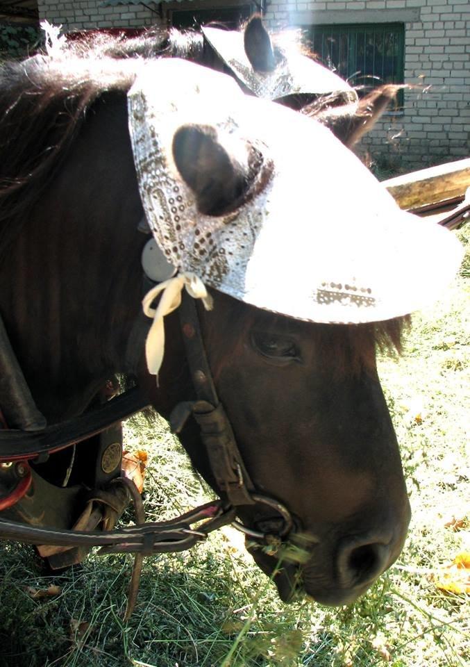 Обитатели николаевского зоопарка переняли «моду» на украшения и прически (ФОТО), фото-6