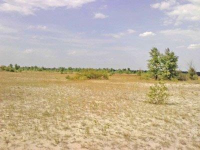 На левом берегу Днепродзержинска обнаружена аномальная зона и портал в иной мир, фото-5