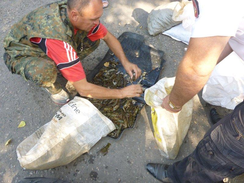 В  Стародубовском водохранилище неизвестные лица массово вылавливали раков (фото) - фото 1