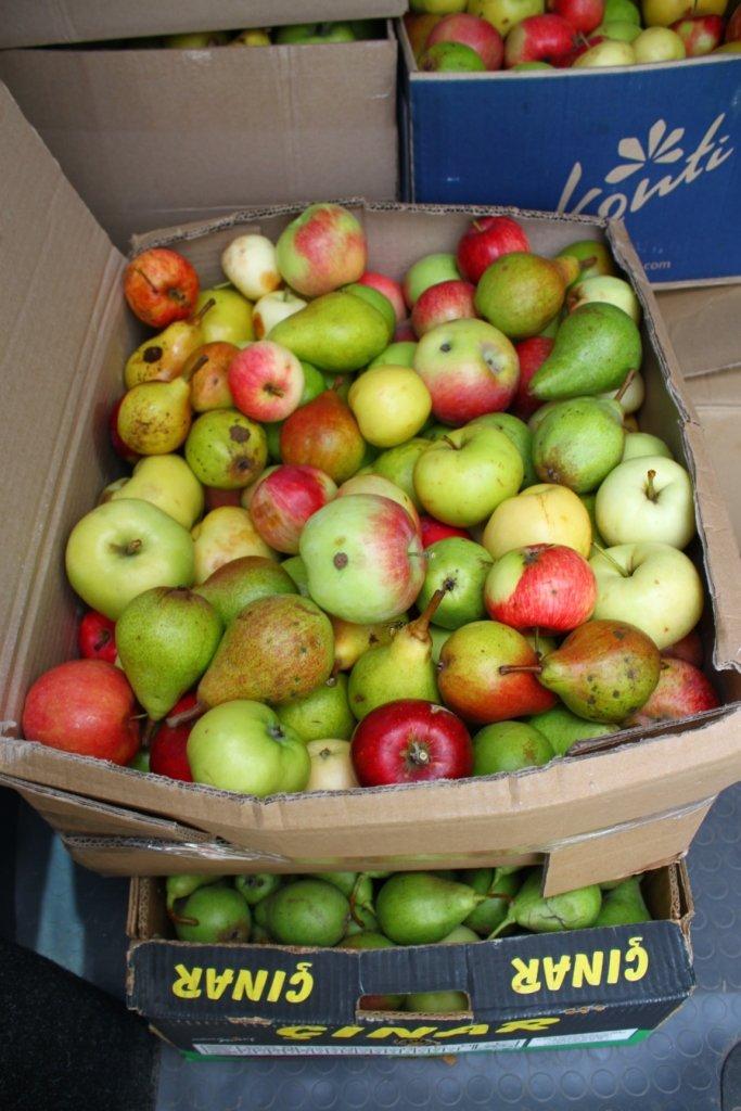 У Житомирі віряни передали на полігон для військових яблука і груші, фото-6
