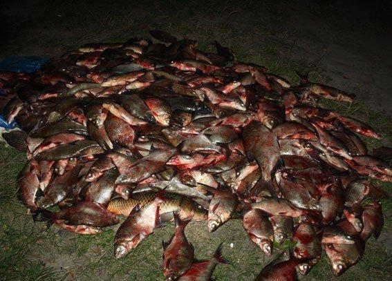 На Полтавщине задержали рыбинспекторов-браконьеров (ФОТО) (фото) - фото 1