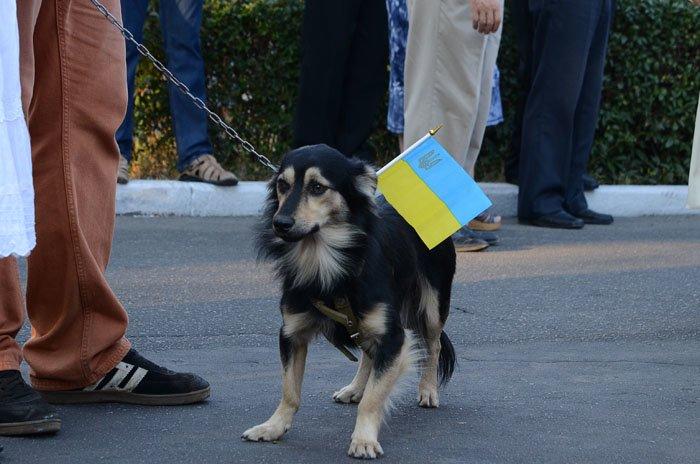 Николаевцы отметили День Независимости в вышиванках и с флагами (ФОТОРЕПОРТАЖ), фото-21