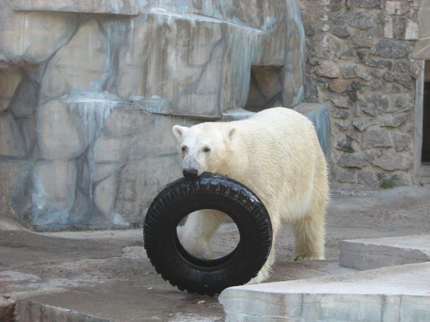 Медведи из николаевского зоопарка обзавелись новыми игрушками (ФОТО), фото-2
