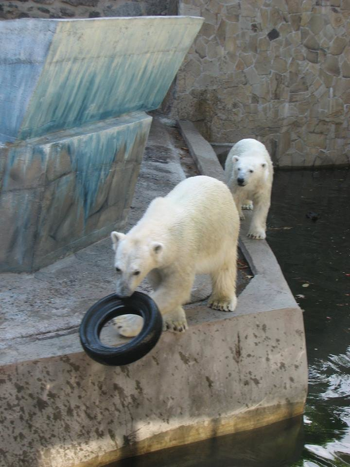 Медведи из николаевского зоопарка обзавелись новыми игрушками (ФОТО), фото-1