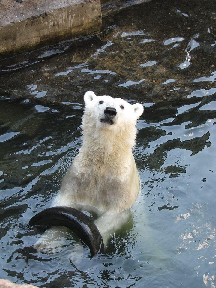 Медведи из николаевского зоопарка обзавелись новыми игрушками (ФОТО), фото-3