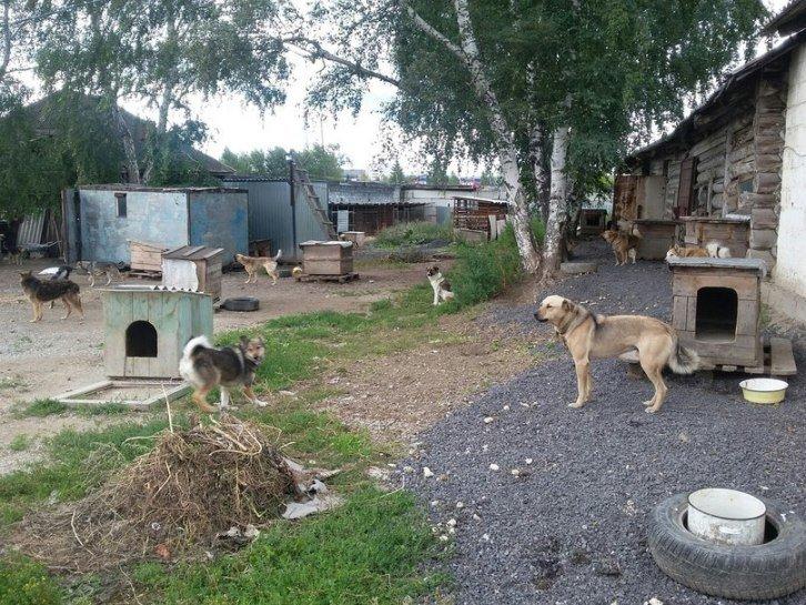 Полевской приют для бездомных животных остается в центре внимания.  Фото (фото) - фото 1