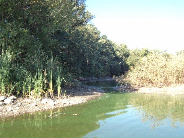 Наслідки аномальної спеки для водойм Вінниччини (фото) (фото) - фото 2
