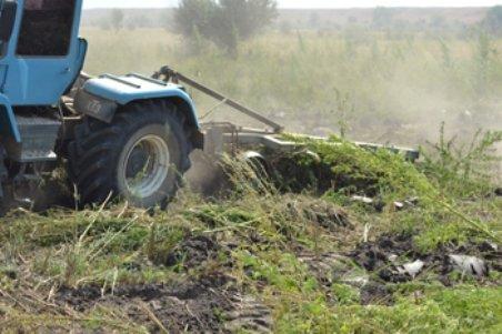 В Крыму к уничтожению приговорили еще одно конопляное поле. В незаконный оборот не попало 1,7 тонн растений (ФОТО) (фото) - фото 1
