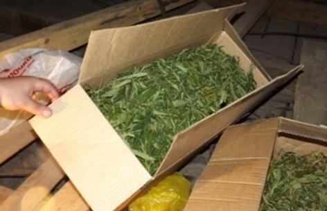 В Крыму к уничтожению приговорили еще одно конопляное поле. В незаконный оборот не попало 1,7 тонн растений (ФОТО) (фото) - фото 4