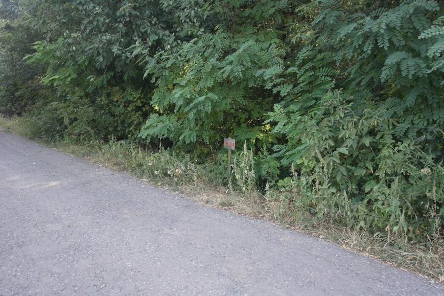 Кладбище динзавода в Красноармейске не заминировано, в отличие от ряда прилегающих территорий (фото) - фото 2