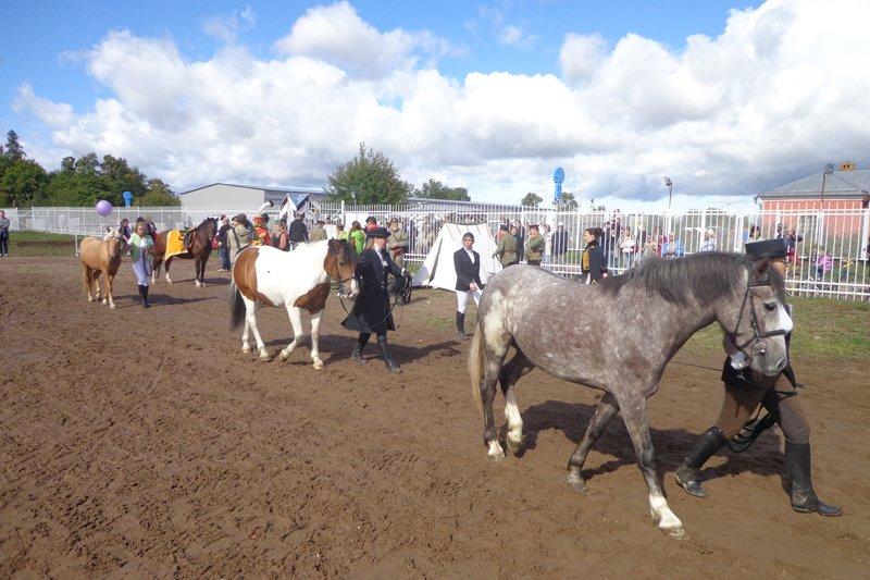 Horse_history3