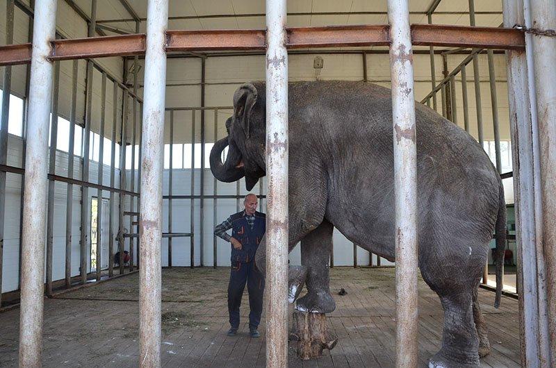 Носорогие. В Старооскольском зоопарке селятся исчезающие виды животных (фото) - фото 1