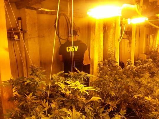На Франківщині та Черкащині діяли потужні нарколабораторії, де вирощували наркотики для країн ЄС (ФОТО+ВІДЕО) (фото) - фото 3