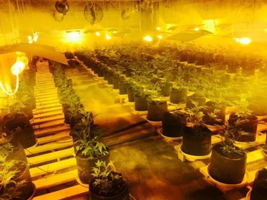 На Франківщині та Черкащині діяли потужні нарколабораторії, де вирощували наркотики для країн ЄС (ФОТО+ВІДЕО) (фото) - фото 2