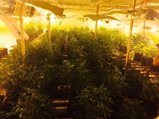 На Франківщині та Черкащині діяли потужні нарколабораторії, де вирощували наркотики для країн ЄС (ФОТО+ВІДЕО) (фото) - фото 1