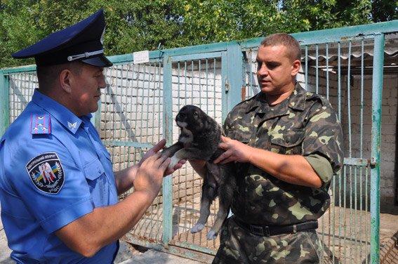 Служебная собака нашла оружие в админздании Николаева  (ФОТО+ВИДЕО) (фото) - фото 3