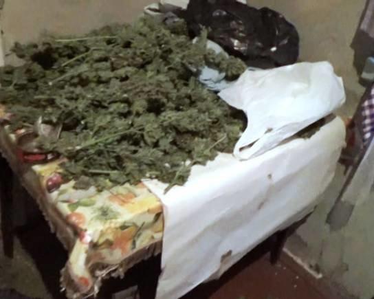 В Киевской области милиция изъяла коноплю на 1 млн грн (ФОТО, ВИДЕО) (фото) - фото 2