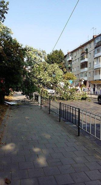 Ситуація на дорогах міста: на вулиці Чупринки на дорогу впало дерево (ФОТО) (фото) - фото 1