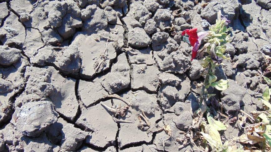 Начало осени в Мариуполе выдалось аномально жарким, завтра ожидается шторм (ФОТО) (фото) - фото 4