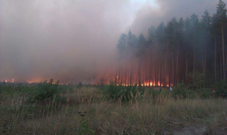 На Хмельниччині ліквідовану масштабну лісову пожежу (Фото), фото-1