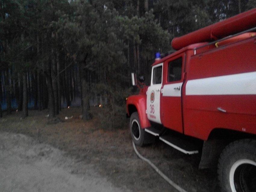 На Хмельниччині ліквідовану масштабну лісову пожежу (Фото), фото-2