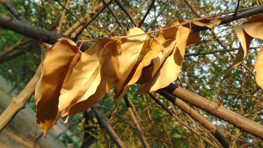 Фотопятница: «Осень. Первое прикосновение» (фото) - фото 1