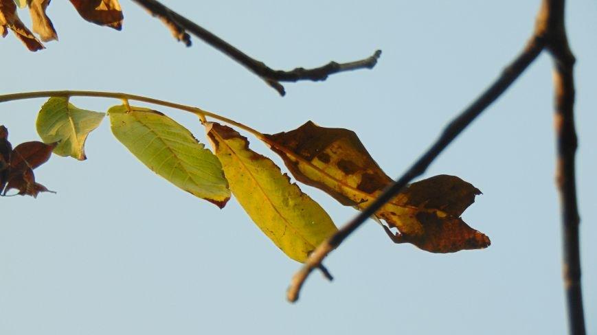 Фотопятница: «Осень. Первое прикосновение» (фото) - фото 2