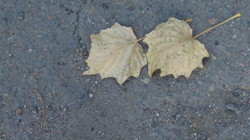 Фотопятница: «Осень. Первое прикосновение» (фото) - фото 3