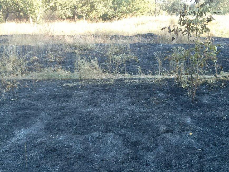В Мариуполе зеленые зоны Приморского парка превращают в черные (ФОТОФАКТ) (фото) - фото 2
