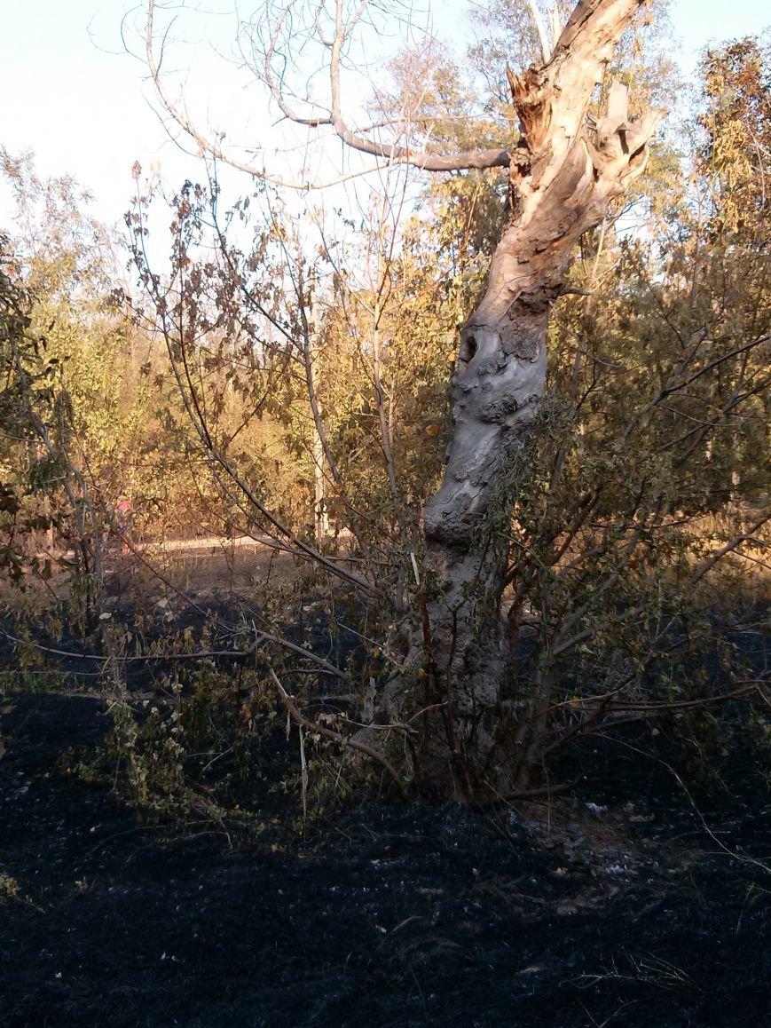 В Мариуполе зеленые зоны Приморского парка превращают в черные (ФОТОФАКТ) (фото) - фото 1